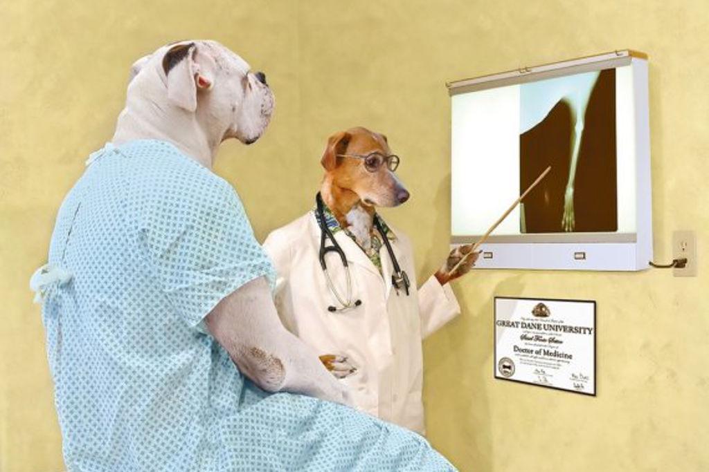 Лет, прикольные картинки врачей животных