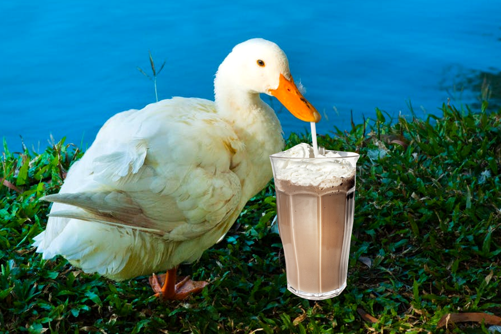What is a 'milkshake duck'? Macquarie's 2017 word of the year explained