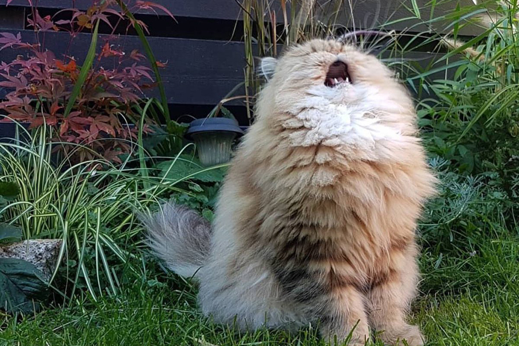 today in cat memes on twitter what song is kitty singing