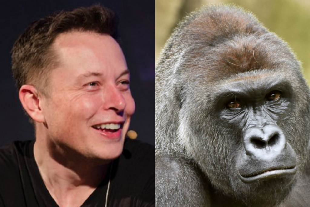 Elon Musk Just Released a Rap Song About Harambe the Gorilla