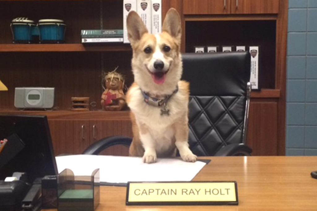 Corgi who played Cheddar on Brooklyn Nine-Nine dies at 13