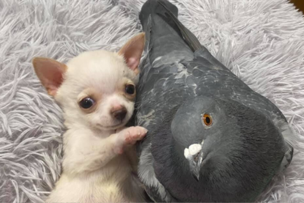Puppy, pigeon form adorable bond that has captured the hearts of millions
