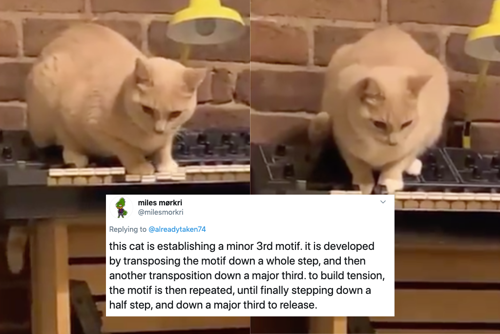 Tik Tok Cat Io Gets Famous For Playing Haunting Melody